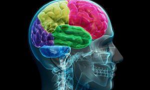 Органическое поражение головного мозга — виды, причины и последствия болезни