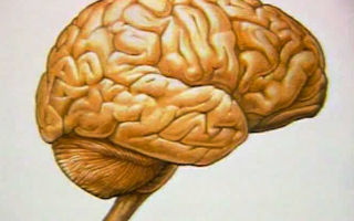 Отек головного мозга у детей и взрослых : причины, лечение и последствия