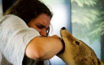 Бешенство у человека после укуса животного: как и когда проявляются первые признаки?