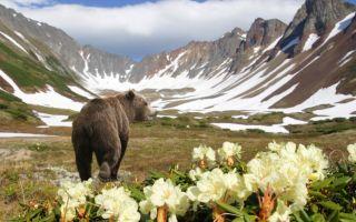 Туры на Камчатку – к новым горизонтам