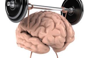 Строение и развитие человеческого мозга, и чем отличается мужской мозг от женского?