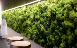 Стабилизированный мох: изготовление и сферы применения