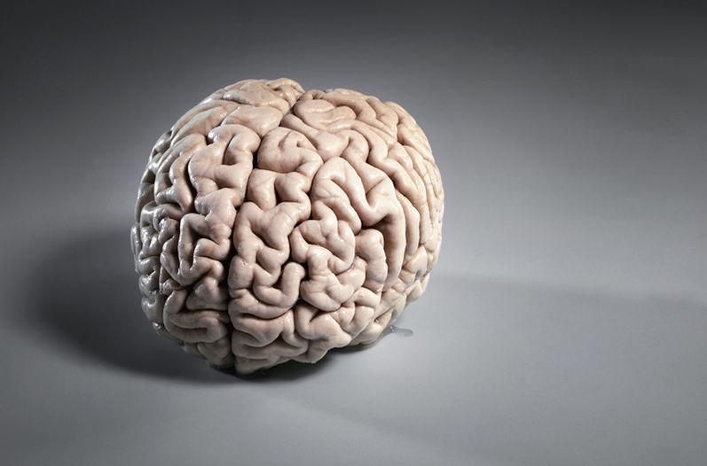 Мозг на сером фоне