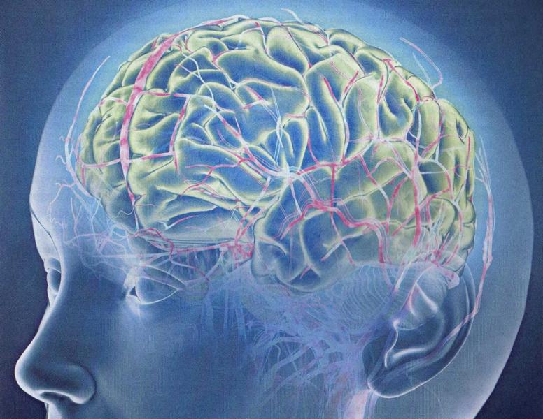 Человеческая голова