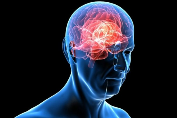 Человек и его мозг