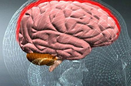 Менингит и мозг