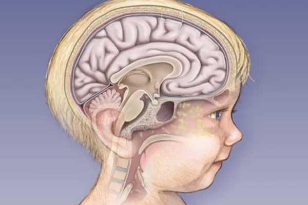 Ребенок и его мозг