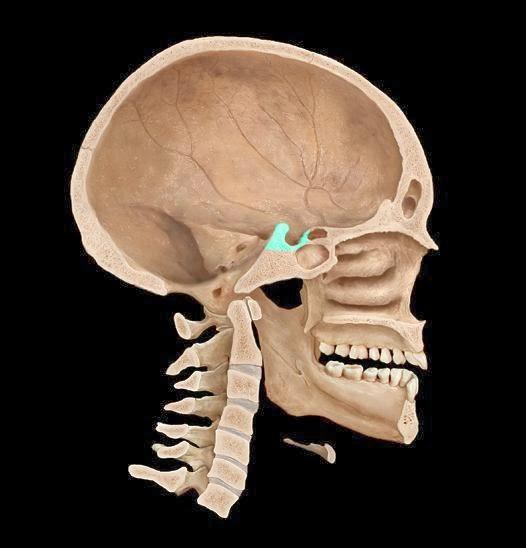 Турецкое седло в головном мозге