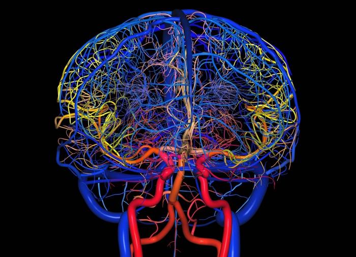 Мозг из разноцветных линий