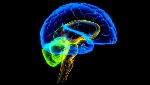 Мозг на черном фоне