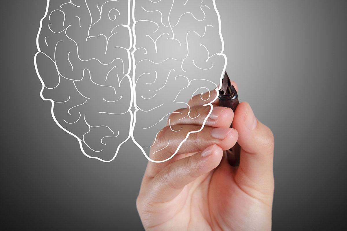 Нарисованный мозг