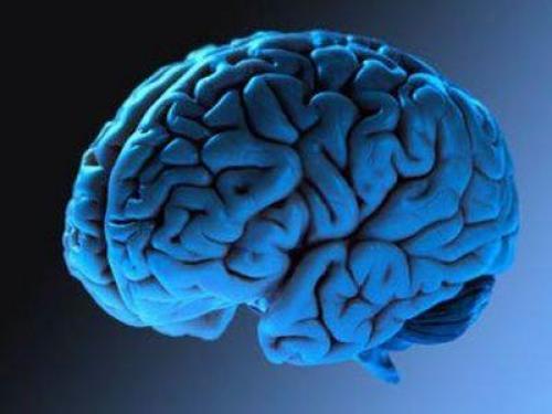 Мозг на голубом фоне