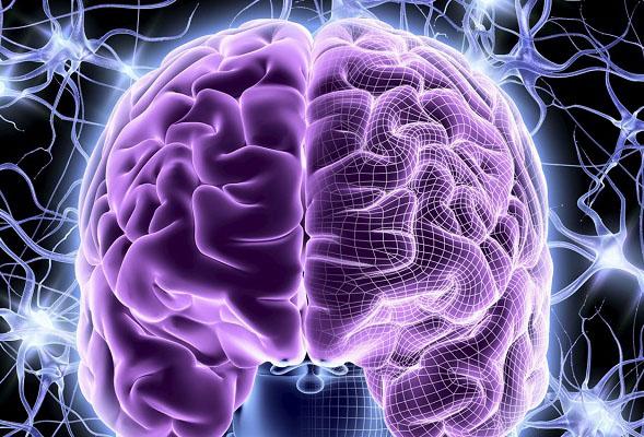 Фиолетовый мозг