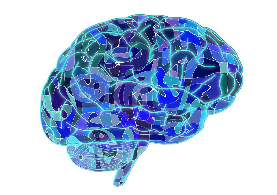 Мозг разноцветный